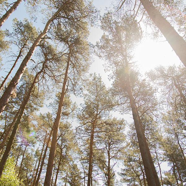 Wald Nachhaltig Natur Bäume Baum Holz Laminatboden